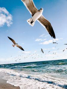 Sa je vleugels uit met een UWV werkfit traject